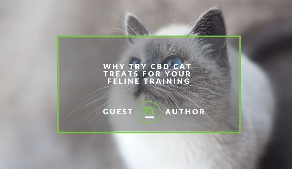 train cat using CBD treats
