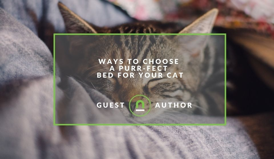 How to pick a cat bed