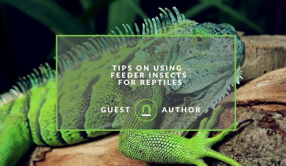Insects you can feed a pet reptile