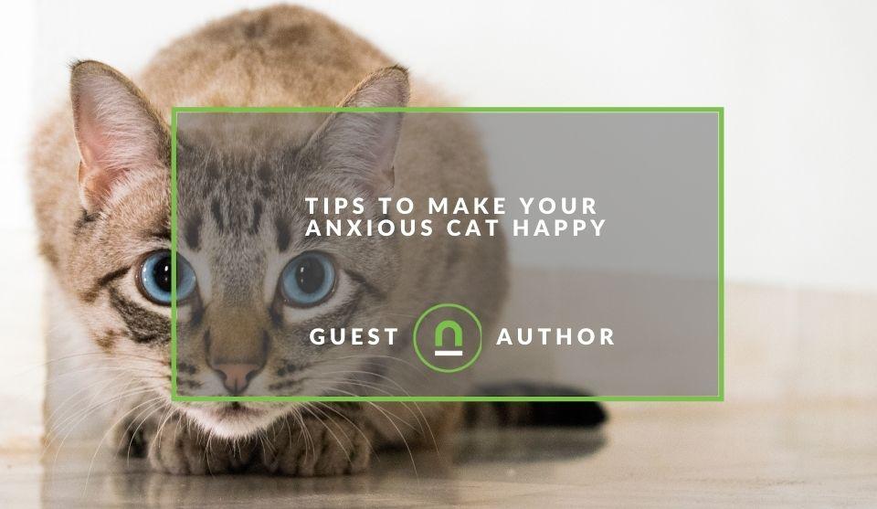 anxious cat tips