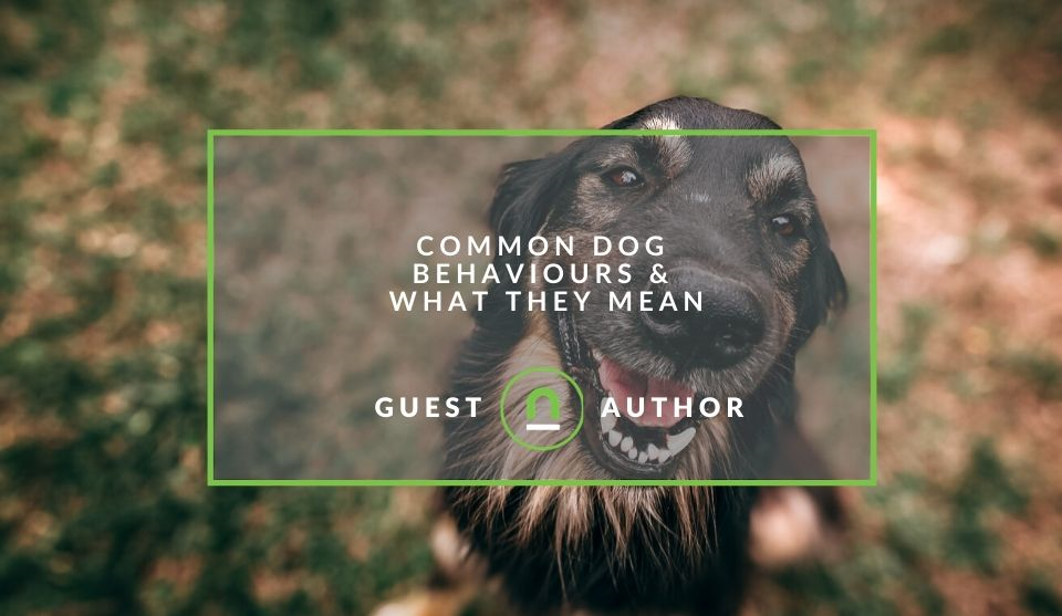 Dog behaviours and what they mean