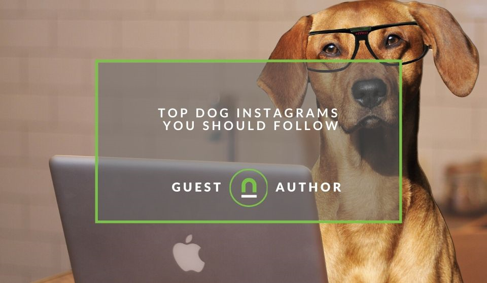 Best Dog Instagram accounts