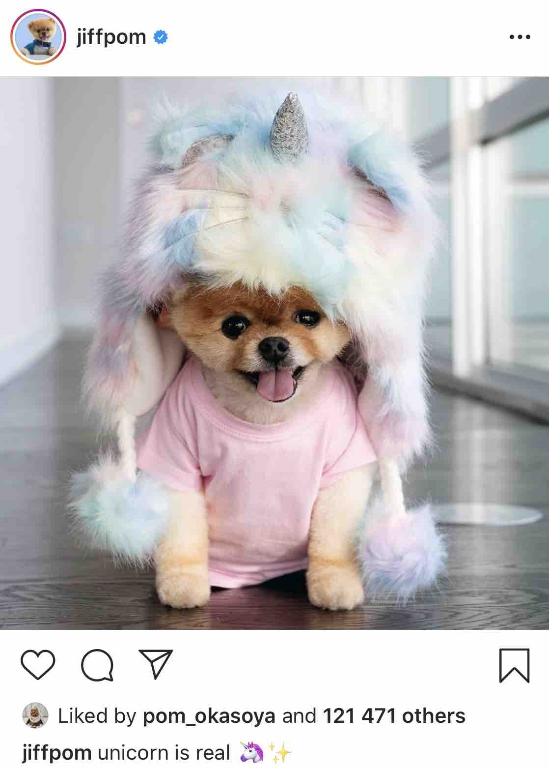 Jiffpom - Instagram