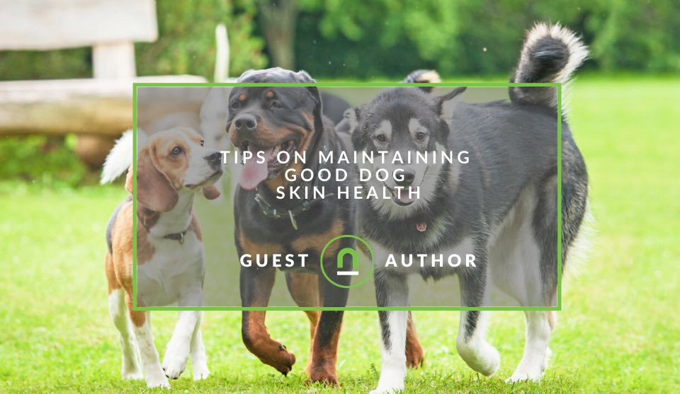 How to improve your dogs skin and fur health