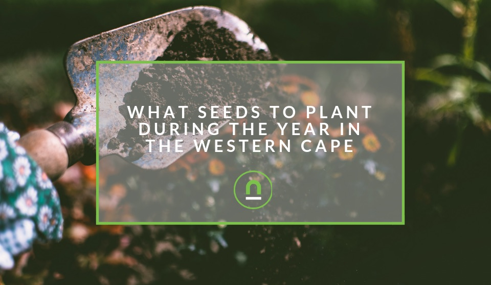 Planting veggies throughout the year in the Western Cape