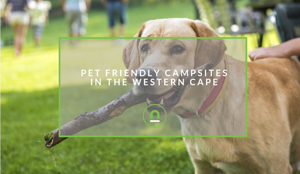 Pet friendly Places to Camp Western Cape