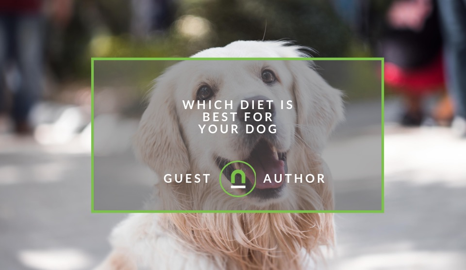 Picking a diet for your dog