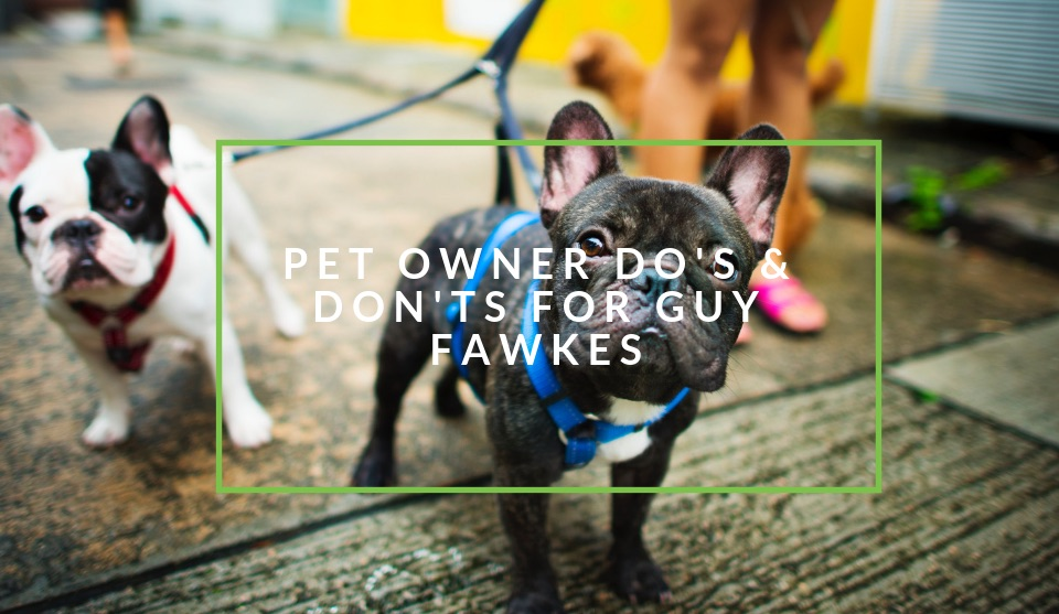 How to keep your pet safe on Guy Fawkes
