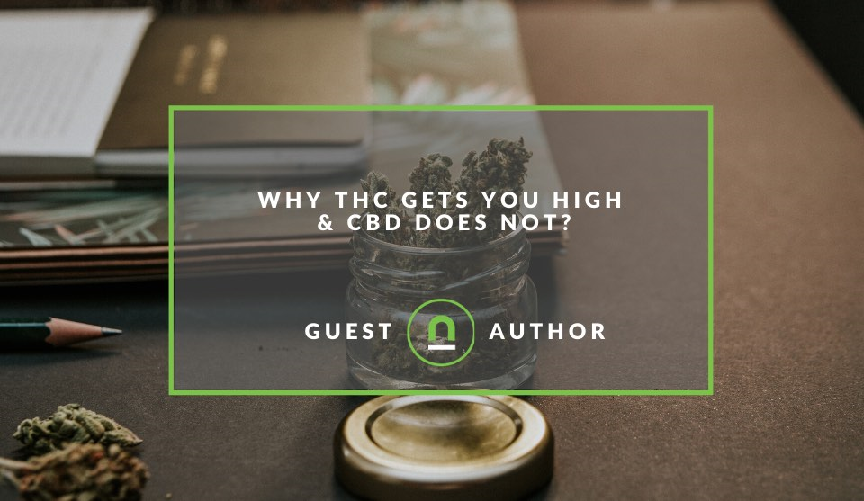 CBD vs THC getting you high