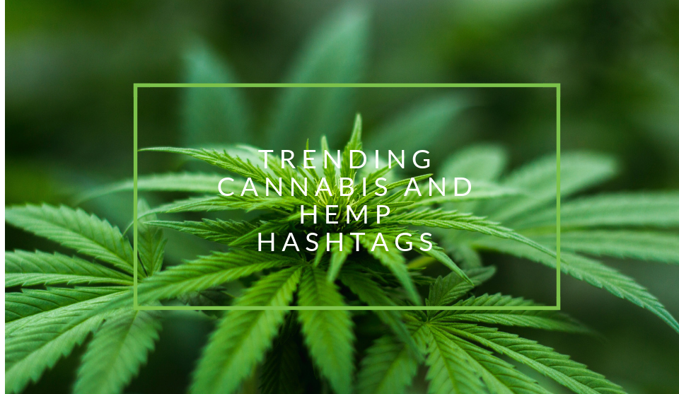 Trending hemp and weed hashtags