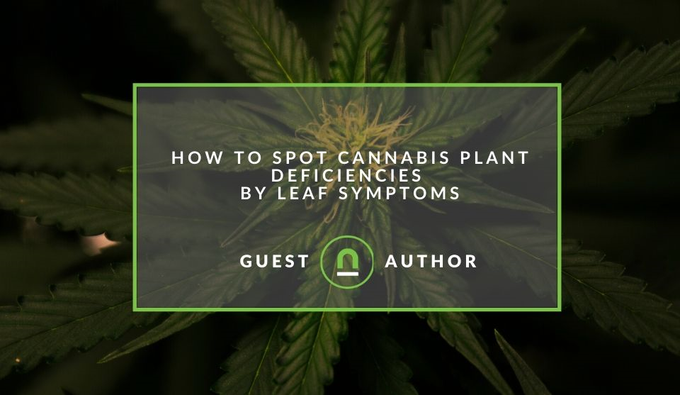 Spotting issues with your cannabis plants