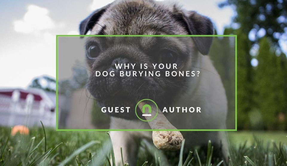 Reason why dogs bury bones