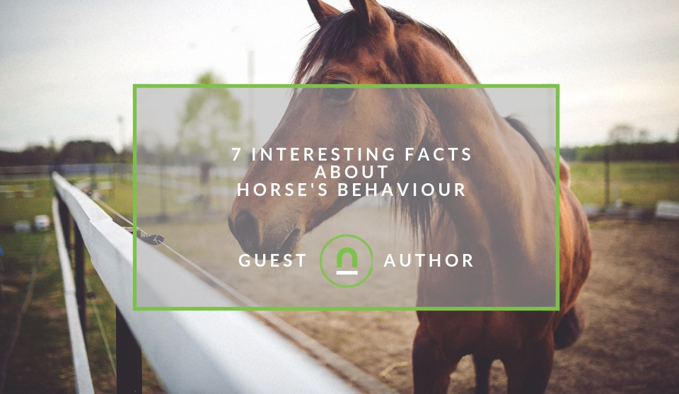 Facts about horses behaviour