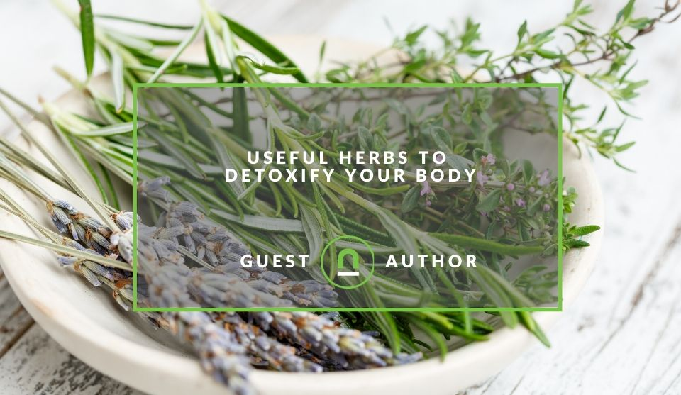 Herbs to detox your body