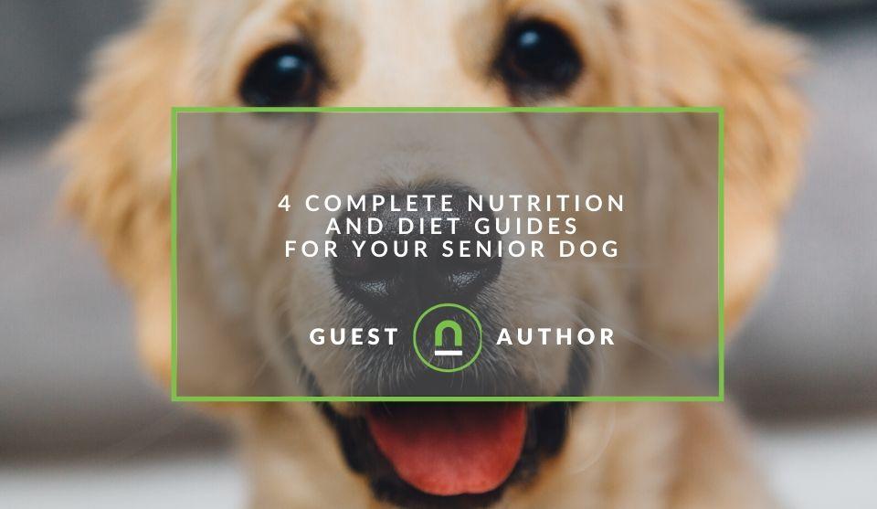 Diet for older dogs