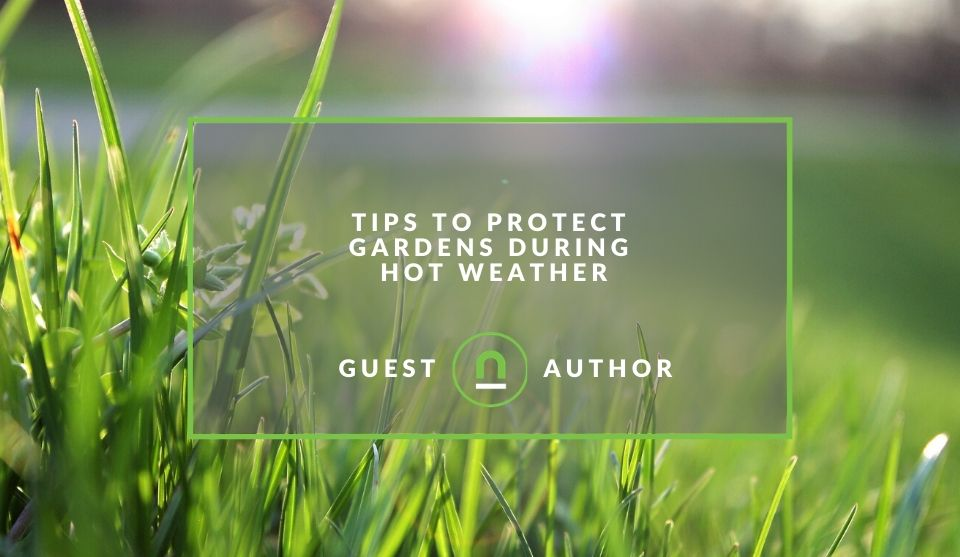 Protect gardens in hot weather
