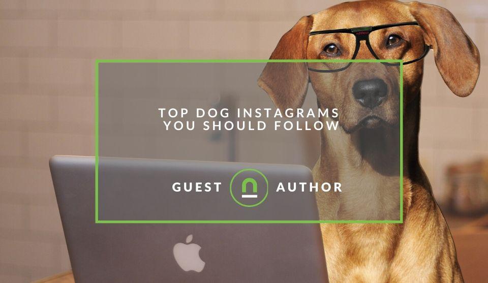 Best Dog Instagram accounts